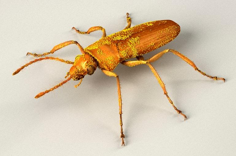 Ein 3D-Modell von Darwinylus marcosi, inklusive der an ihm haftenden Pollen.