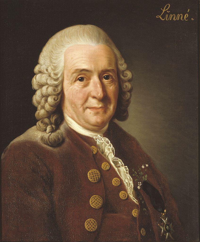 Seit über 250 Jahren orientieren sich Biologen bei der Benennung neu entdeckter Arten an den Regeln des schwedischen Naturforschers Carl von Linné.