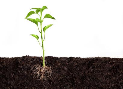 Unsichtbares Blattorgan: Unter der Erde liegt die Wurzel der Pflanzen. Über sie nimmt die Pflanze Nährstoffe auf. Im Boden tummeln sich aber auch viele Mikroorganismen. Manche davon sind für das Wachstum der Pflanze förderlich.