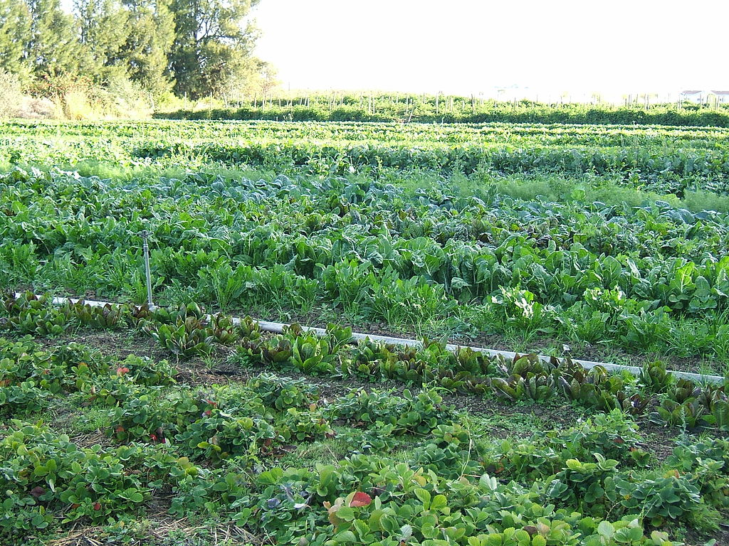 Auf kleinen Versuchsparzellen, die ökologisch bewirtschaftet werden, herrschen ganz andere Bedingungen als auf großen Feldern. Diese gilt es in Zukunft, stärker in den Blick zu nehmen.