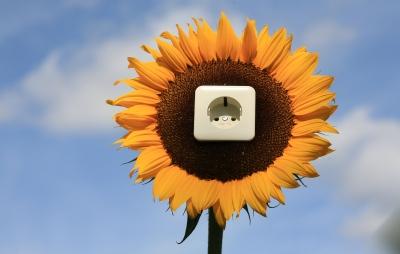 Pflanzen können als erneuerbare Stromquelle benutzt werden –eine solche Steckdose braucht man dazu nicht.