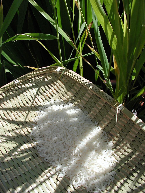 Auch bei unserer täglichen Ernährung spielen Pflanzensamen wie Reis eine große Rolle. Damit sich ein Samen bilden kann, bedarf es zuerst einer Befruchtung - ein komplizierter Prozess, bei dem Sperma- und Eizellen zueinander findenmüssen.
