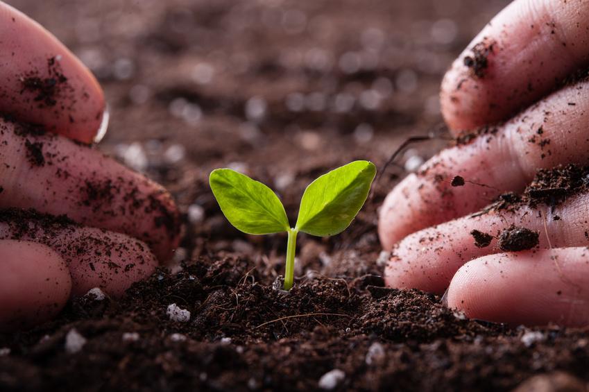Pflanzen sind unsere Lebensgrundlage - es gibt vielfältige Nutzungsmöglichkeiten für die grünen Alleskönner. (Bildquelle: © beeboys/Fotolia.com)