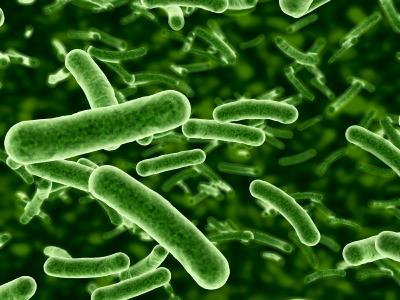 Bakterien. (Quelle:© iStockphoto.com/ David Marchal)