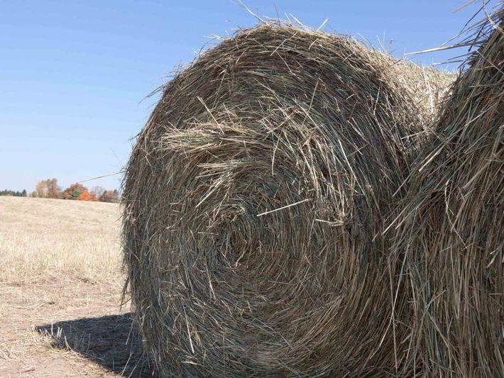 Ertragsarme Böden bieten zusätzliche Anbaufläche für die Bioenergie-produktion (Quelle: © Phil Robertson /MSU)