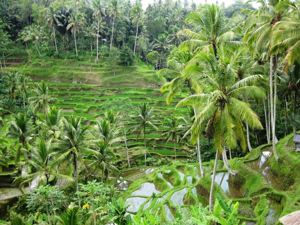 Vom Mensch gemacht: Reisterrassen auf Bali. (Quelle: © glasmost / pixelio.de)