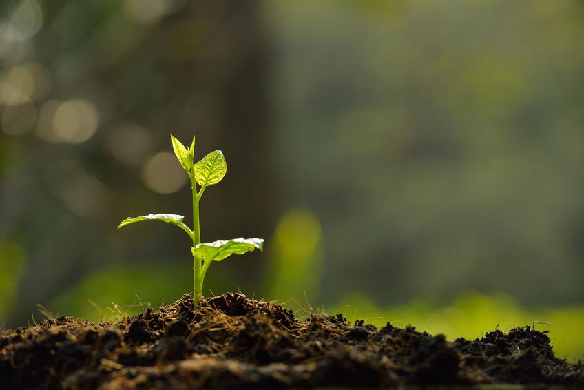Pflanzen sind nicht nur unsere Ernährungsgrundlage, sie nehmen auch eine Schlüsselrolle beim Umbau der Wirtschaft in eine nachhaltige Bioökonomie ein.