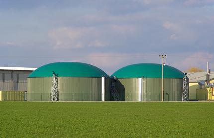 Biogas: Zur Gewinnung von Methan werden auch Hirsesorten verwendet.