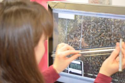 Die Wissenschaftlerin Dr. Margaret Couvillon untersucht hier gerade Bienentänze.