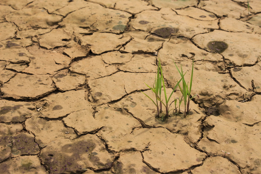 Die DREB/CBF Familie spielt offenbar vor allem bei der Reaktion der Pflanze auf abiotischen Stress wie zum Beispiel Trockenheit eine wichtige Rolle.