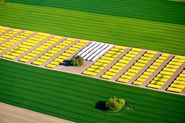 """Pflanzenzüchtung ist vielfältig. Die Kombination aus Labor, Gewächshaus und dem Anbau auf dem Feld sind auf dem Weg zu neuen Sorten nötig. """"Bewerber in der Pflanzenzüchtung sollten sich in der landwirtschaftlichen Praxis auskennen"""", so Brauer."""