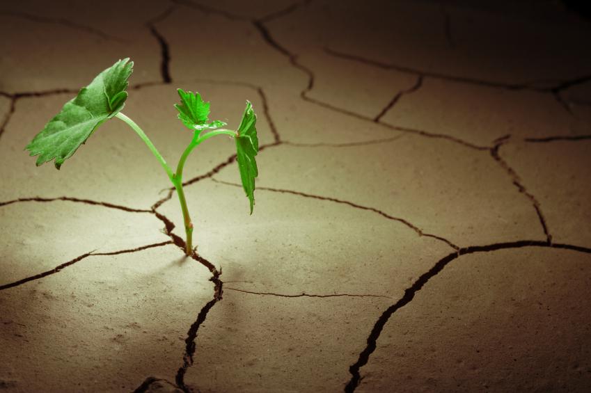 Bei geringer Luftfeuchtigkeit muss die Pflanze ihre Stomata schließen, um nicht auszutrocknen. Aber nur so weit, dass noch genügend CO2 für die Photosynthese eindringen kann. (Quelle: © iStockphoto.com / Chepko Danil)