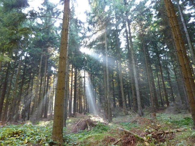 Der Begriff Nachhaltigkeit hat seinen Ursprung in der Forstwirtschaft.