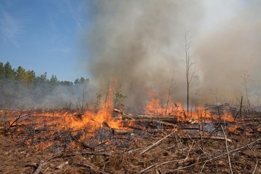 Wo Wälder gerodet werden, wird Kohlendioxid frei. Nachwachsende Pflanzen können das nur teilweise kompensieren. (Quelle: © istockphoto.com / Samir Arora)