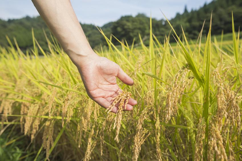 Pflanzen zu drücken oder zu streicheln ist eine jahrhundertealte Methode im japanischen Landbau - es erhöht die Widerstandsfähigkeit der Pflanzen. (Bildquelle: © japolia - Fotolia.com)