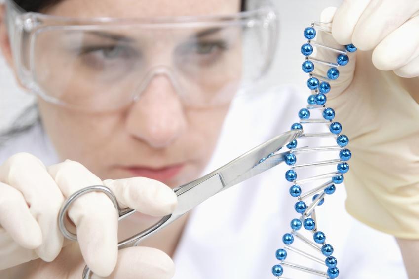 Beim genome editing schneiden