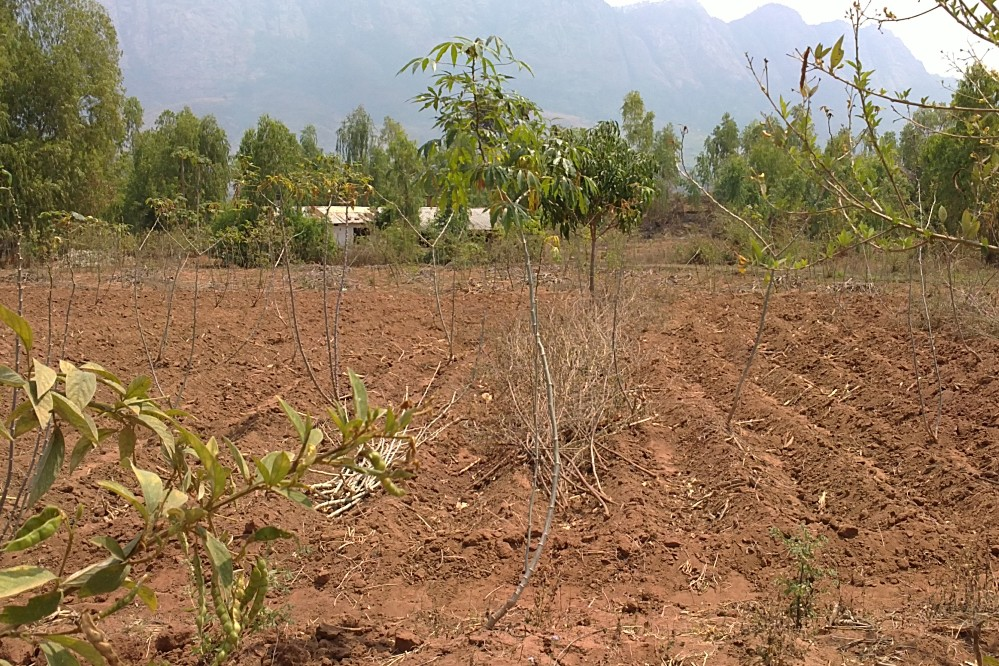 Ein Feld in Malawi.
