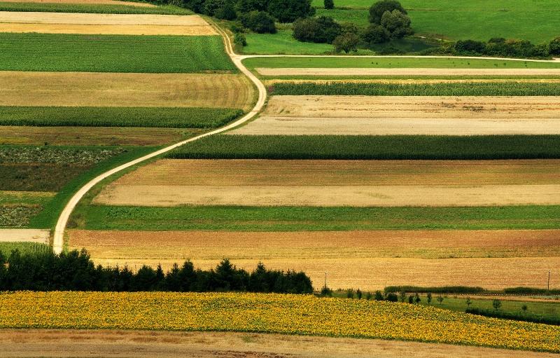 Eine diversifizierte Agrarlandschaft ist in weiten Teilen Deutschlands typisch (Quelle: © Oliver Mohr / Pixelio - www.pixelio.de)