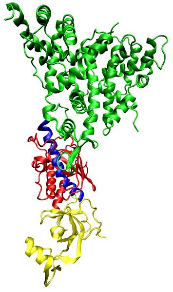 Das Enzym Dicer stoppt die Transkription, indem es RNA-Transkripte von der RNA-Polymerase II trennt. (Quelle: ©  Opabinia regalis/ Wikimedi.org; CC BY-SA 3.0)