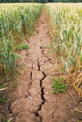 Dürre bedroht die Landwirtschaft. (Quelle: © iStockphoto.com/ Susan Stewart)