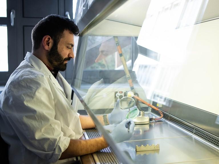 Mohammed Aizouqentnimmt einer Petrischale mit dem Cyanobakterium Synechocystis einige Zellen für weitere Analysen. Die Blaualge verfügt über ein Enzym, mit dem sie Öl synthetisieren kann.
