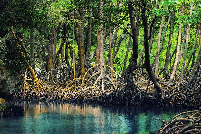 Mangrovenwälder sind die artenreiche