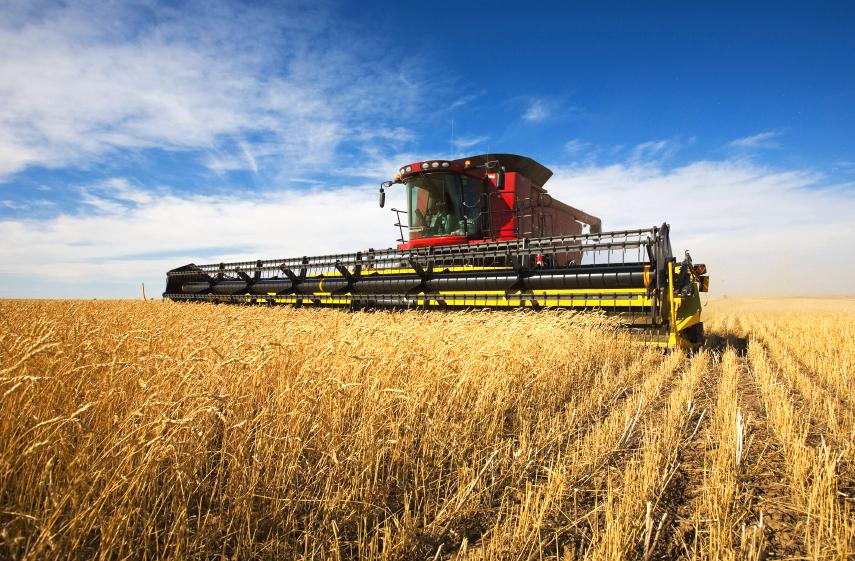 Um die Erträge für die Zukunft zu sichern, müssen klimabedingte Anpassungen in der Landwirtschaft vorangetrieben werden.