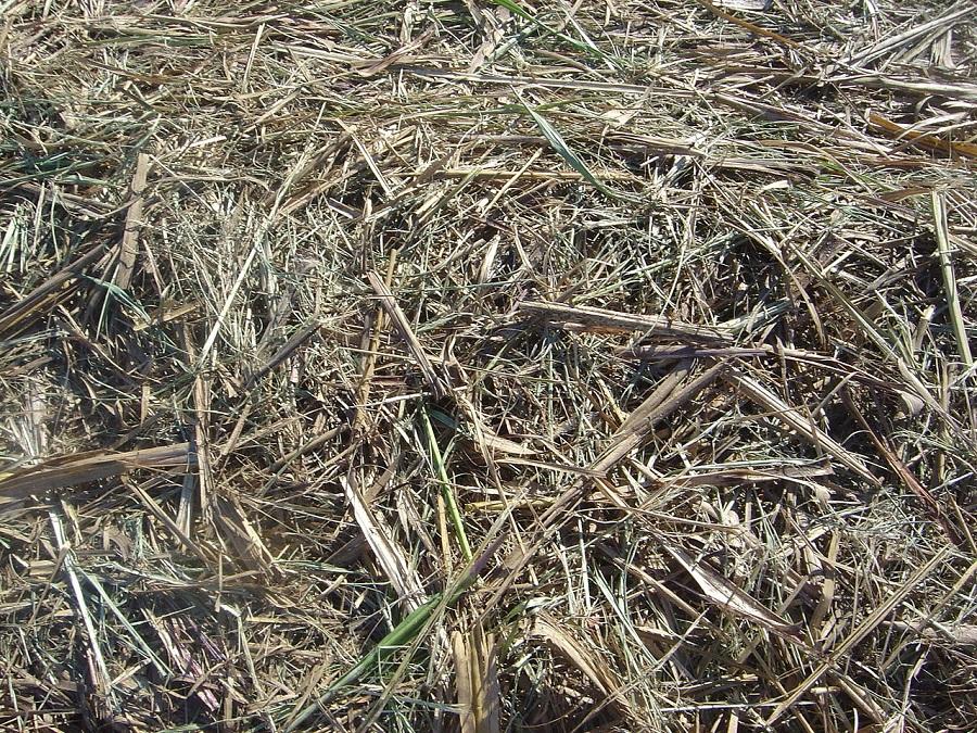 Bagasse, auch Ampas genannt, ist ein Nebenprodukt, das nach dem Auspressen des Zuckersaftes in den Zuckerrohrmühlen übrig bleibt. Die widerspenstigen Fasern sind der Ausgangsstoff für das Bio-Kerosin.