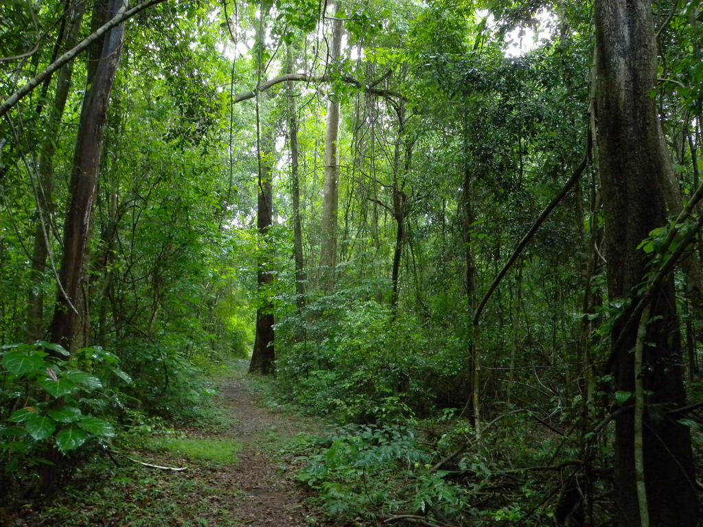 26 der 97 Pflanzenarten stammten aus dem Ankarafantsika National Park auf Madagaskar.