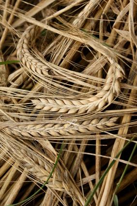 Der Handel mit Getreide und Zucker, mit Soja und Fleisch hat sich seit 1950 mehr als verzehnfacht. (Quelle: © iStockphoto.com/ Nadezhda Emelyanova)