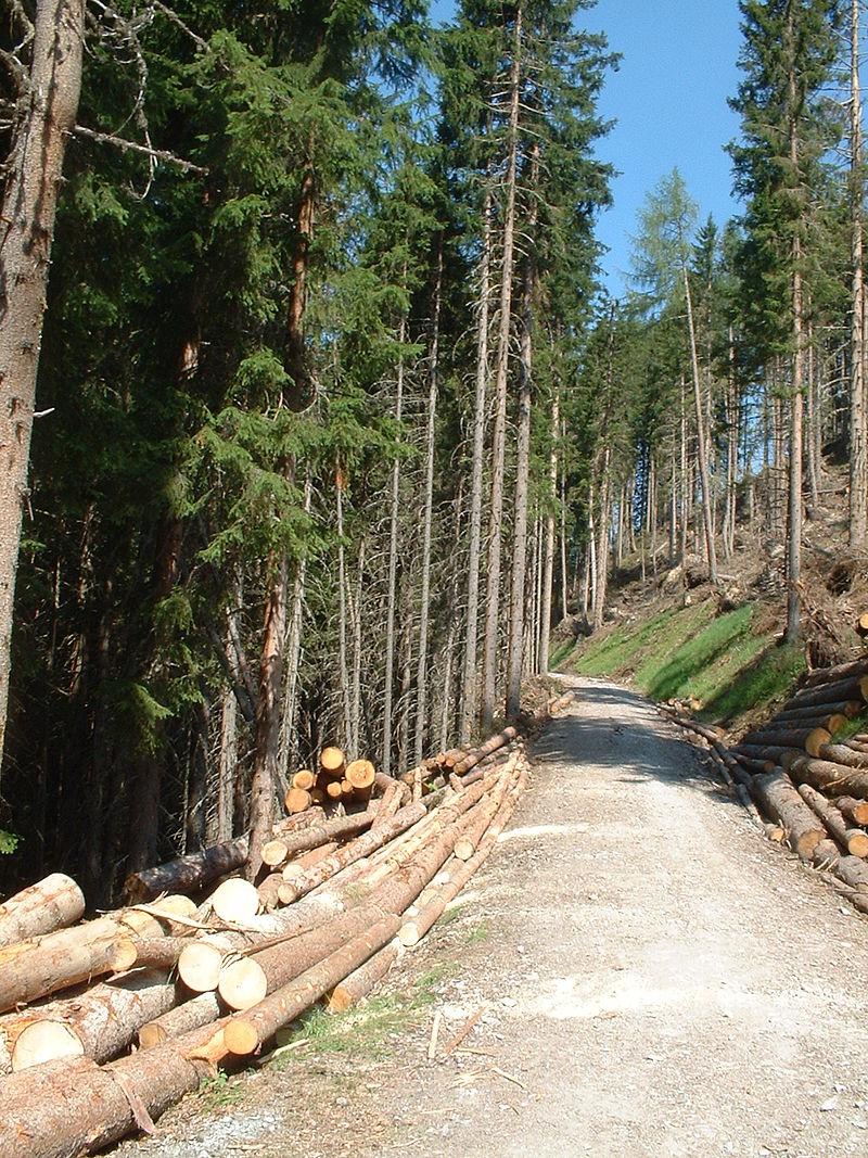 """Mit Wald bedeckte Flächen werden von vielen Berechnungsmodellen als """"natürliche Wälder"""" identifiziert, obwohl zwei Drittel bis drei Viertel aller Wälder durch den Menschen genutzt werden."""
