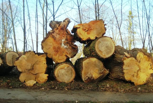 Holz ist ein vielseitiger Rohstoff, an den je nach Verwendung andere Ansprüche gestellt werden (Quelle: © Irene Lehmann/ pixelio.de).