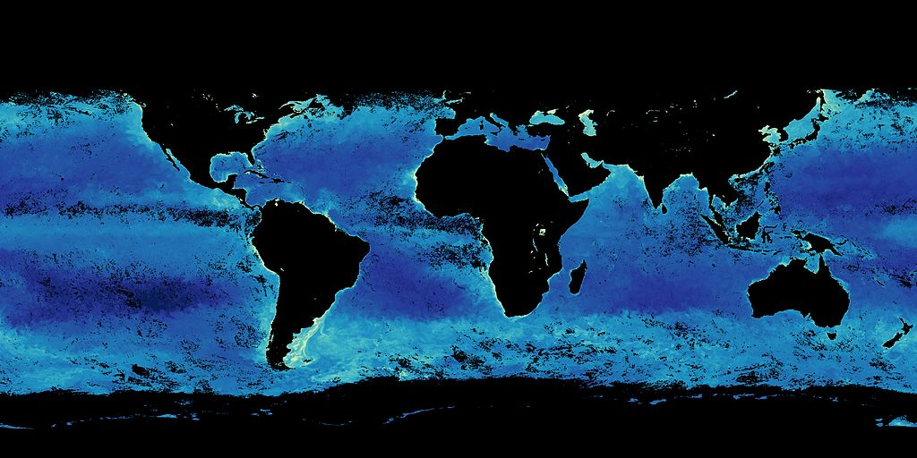 Die hellen Bereiche markieren die Gebiete, in denen das Phytoplankton blüht. Da das Bild im November aufgenommen wurde, der Sommer auf der Südhalbkugel also gerade anbricht, fällt vor allem der helle Streifen auf, der sich von der Südspitze Südamerikas entlang der Nordgrenze des Südpolarmeeres bis nach Neuseeland zieht.