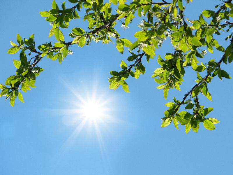 Pflanzen, Cyanobakterien und einige Algen sind in der Lage Sonnenenergie in chemische Energie umzuwandeln. Noch immer ist der biologische Prozess dahinter nicht in allen seinen Schritten aufgeklärt und verstanden.