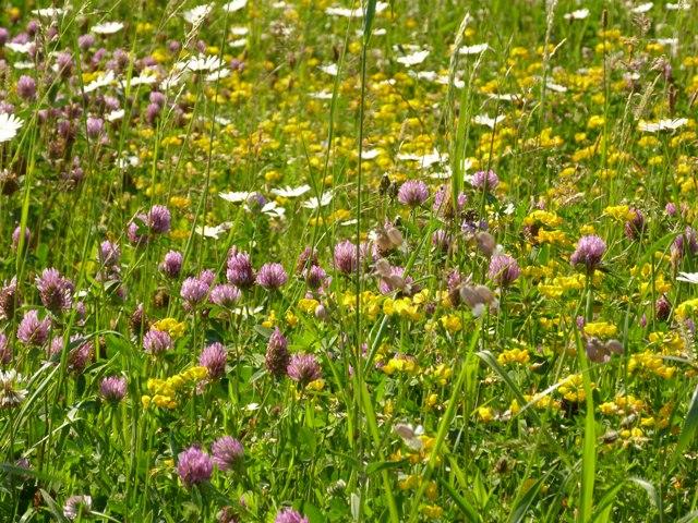 Artenreichtum blühender Pflanzen (Quelle: © PeterA / pixelio.de)