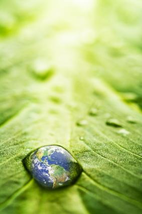 Je wärmer es ist, desto mehr müssen Pflanzen mit Wasser haushalten (Quelle: © iStockphoto.com/ Victor Burnside)