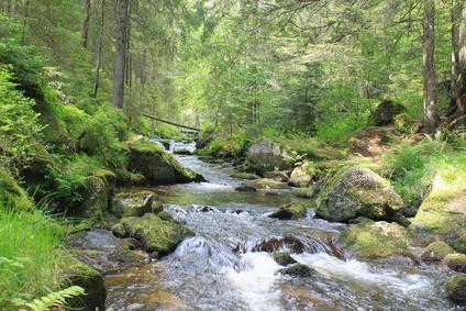 Vor 480- 490 Millionen Jahren besiedelten die ersten Pflanzen das Land. (Quelle: © Gerisch - Fotolia.com)