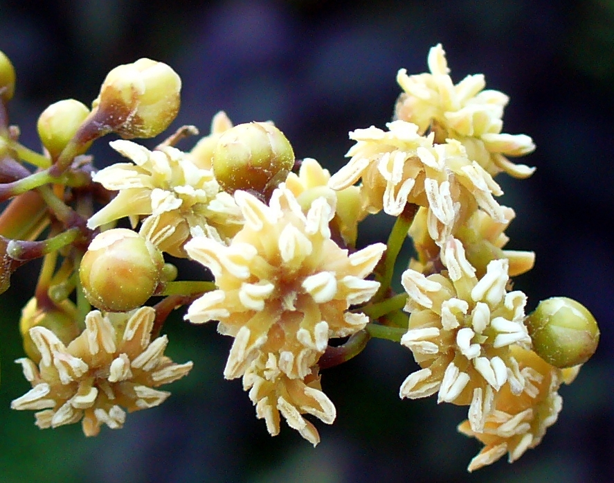 Die Urmutter aller Blütenpflanzen, Amborella trichopoda, hat durch horizontalen Gentransfer riesige Mengen artfremder DNA aufgenommen. Das fremde Erbgut hat keinen Einfluss auf das Erscheinungsbild der Pflanze. Es findet sogenannte neutral Evolution statt.