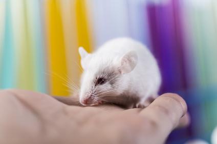 Die Wissenschaftler testeten ihre Technologie im Labor, dafür setzten sie (in vitro, d. h. außerhalb des lebenden Organismus) in Zellen von Mäusen gezielt Punktmutationen.