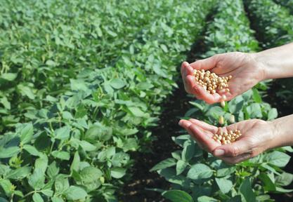Die Studie untersuchte den Pestizidverbrauch bei den sechs am häufigsten eingesetzten transgenen Pflanzen in den USA, darunter auch Soja.