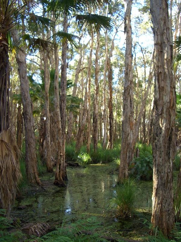 Auch der Regenwald ist gefährdet: Steigende Temperaturen und weniger Niederschläge könnten zu einem vermehrten Absterben führen.