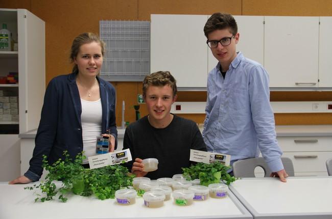 Maria, Raphel und David im Labor mit ihrer Modellpflanze für die Mission auf der ISS. Dabei handelt es sich um eine Feigenart namens Ficus pumila.