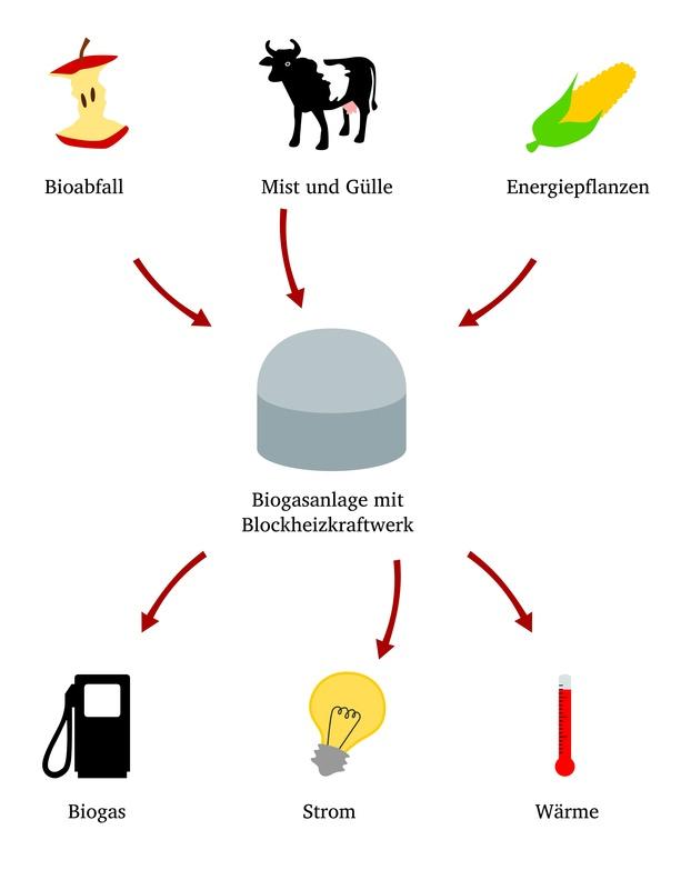 Zur Gewinnung von Biogas werden Gülle und pflanzliche Abfälle in Biogasanlagen vergärt. Mit dem sogenannten Bioerdgas können Erdagasautos betankt werden.