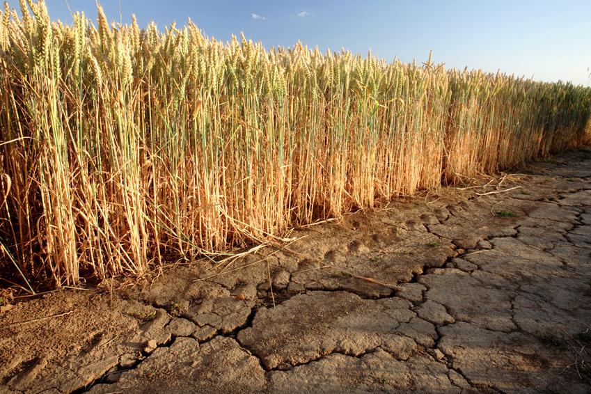 Es wird prognostiziert, dass extreme Ereignisse wie Dürren im Zuge des Klimawandels zunehmen werden. (Bildequelle: © vom/Fotolia.com)