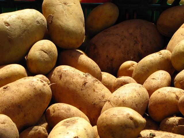 Kartoffeln. (Quelle: © Rainer Sturm / pixelio.de)