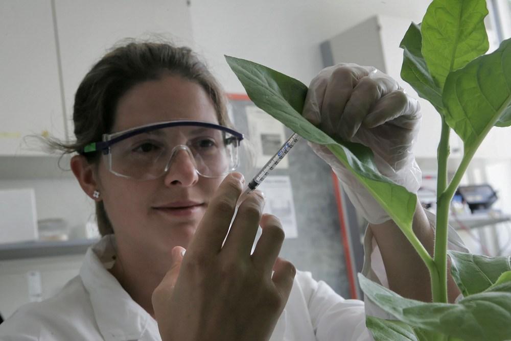 Zentrum für Molekularbiologie der Pflanzen. (Bild: © Metz, Universität Tübingen)