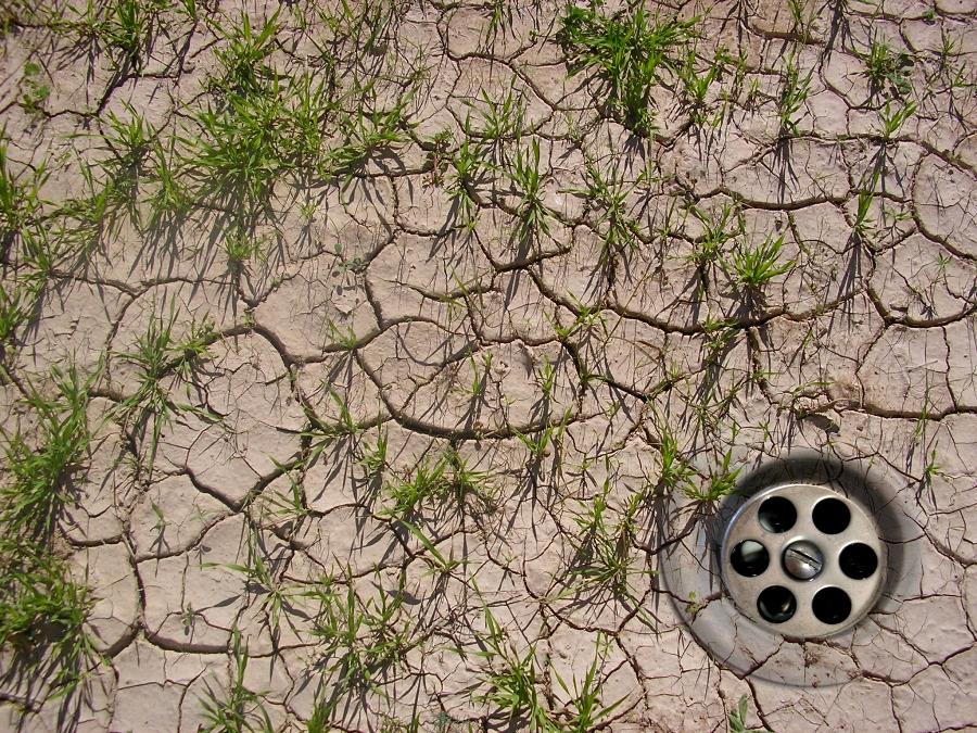 Der Klimawandel verändert nicht nur die Wachstumsbedingungen von Pflanzen, sondern kann auch Einfluss auf den Verlauf von Pflanzenkrankheiten haben.
