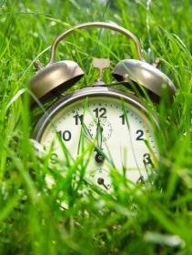 Eine innere Uhr regelt das Wachstum von Pflanzen. (Quelle: © iStockphoto.com/Günay Mutlu)