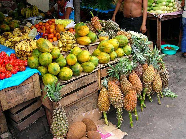 Die Papayas werden in den Tropen angebaut. Landwirte züchten vor allem die Hermaphroditen, da ihreFrüchte am süßesten schmecken und sich daher besonders gut verkaufen.