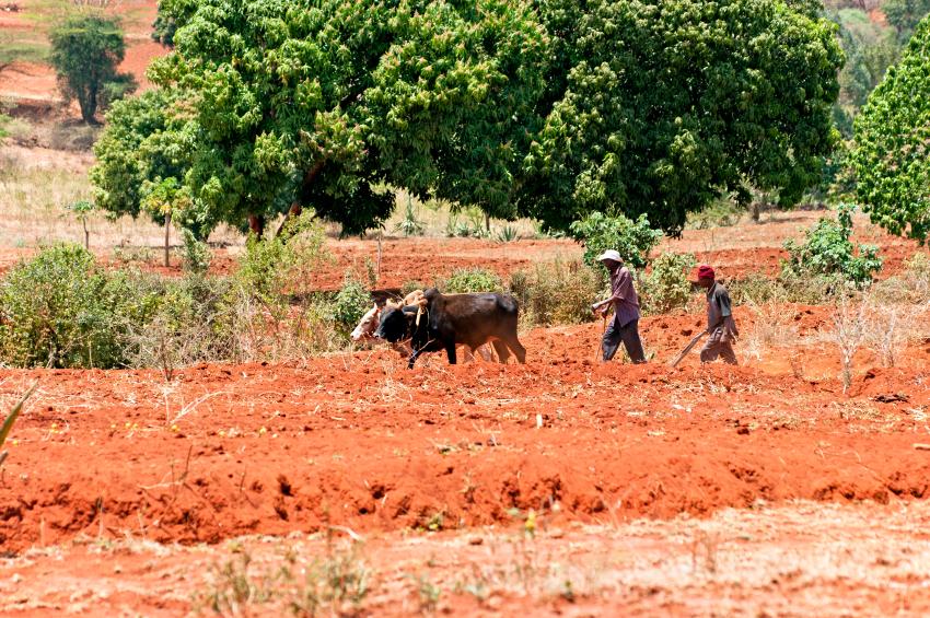 In vielen Regionen der Welt betreiben die Menschen hauptsächlich Landwirtschaft, wie zum Beispiel in Kenia. Dort bietet sich die Möglichkeit, die